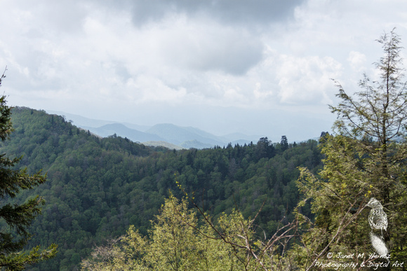 Great Smoky Mountains 2012-0014